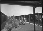 340598PD: Covered walkway, 1964