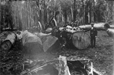004464D: Logs ready for hauling, Yarloop, ca.1903