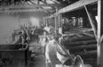 004466D: Waterhouse Mill, ca.1903
